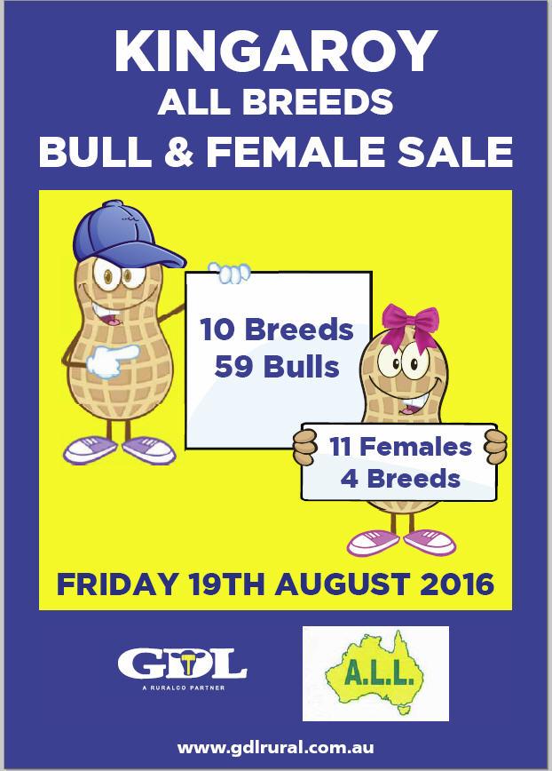 Kingaroy Australia  city pictures gallery : ... Events | Kingaroy All Breeds Bull & Female Sale | Simmental Australia