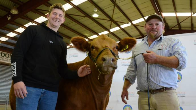 Luke Adams, Loaderry Simmentals, Londonderry, with his $11,500 top-priced Simmental female held and shown by Vaughan Campagnolo, Savannah stud, Myponga, South Australia.