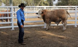 Trent Minnett pictured with Gowrie M209, the top-priced bull of the sale, purchased by the Mt Macquarie Pastoral Company, Blackall, for $15,000.