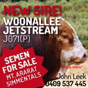 Woonalle Jetstrem - New Sire