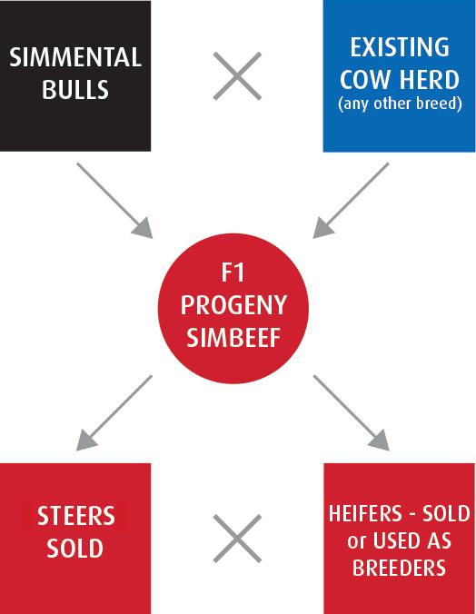 f1-Progeny