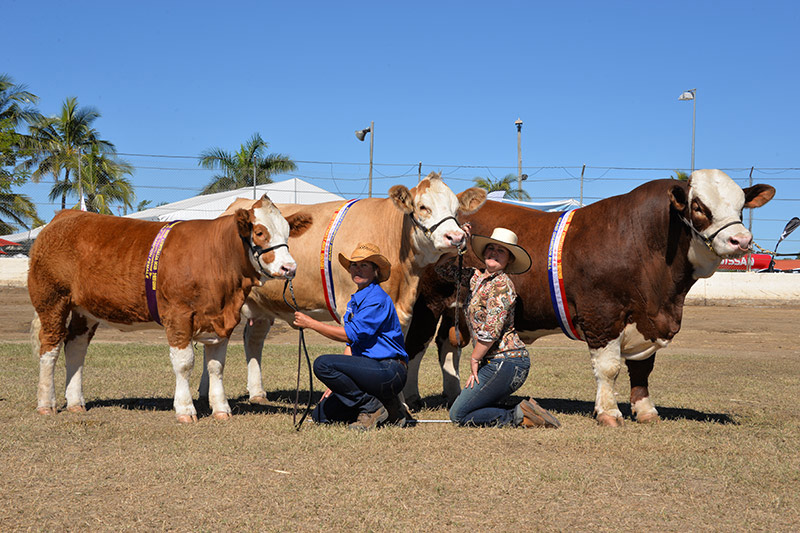 Breeders group won by Meldon Park Simmentals - DALBY QLD