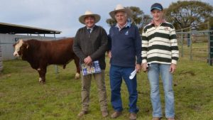 """Barana stud principal Peter Cook and buyers David Wirth and Nick Cave, """"Glengarry"""", Glen Elgin, with the top-priced bull, Barana Latimer, who sold for $13,000 in the stud's 16 annual on-property sale."""