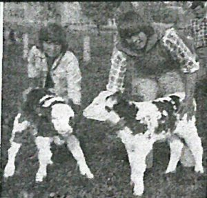 Robert and Michael Introvigne 1976. Michael told us that the bull calf weighed 101lb at a day old. From the booklet 40 years of Simmental in Australia released 2012
