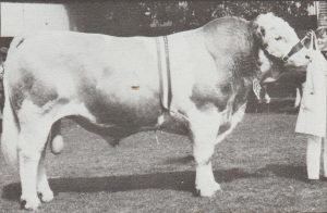 Met Chuck Senior Champion Bull Adelaide Royal 1982. Photo by Jesse Bezwarchny