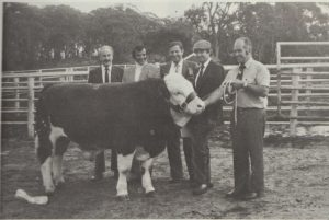 top-priced-bull-at-royal-1976