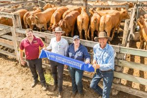 ESM's winning pen of steers pictured with Rob Atherton from Bendigo Bank, Glenn Henrickson from rural bank, Prudence Barwick from Virbac, Lance Whitaker from BLR.