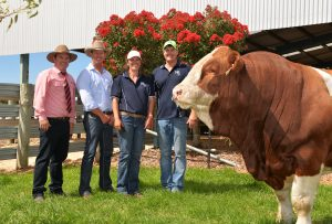 Pictured with the $160,000 record breaking Woonallee Los Angeles are Elders auctioneer Ben Finch, purchaser Brett Nobbs, Nobbs Cattle Co, Duaringa, Qld and Woonallee principals Lizzy and Tom Baker, Furner, SA.