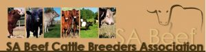 SA Beef Cattle Breeders Assoc
