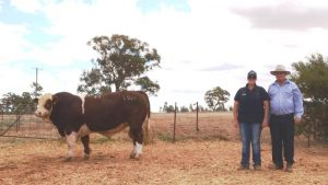 Samantha Moeck, Valley Creek Simmentals, Bowral, with Doug Bradshaw, Blue Dog Simmentals, Wandoan, and the top priced bull Valley Creek Legacy sold for $22,000.