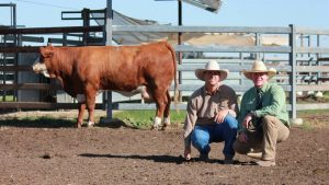 SALE TOPPER: Billa Park Lady Rush L7 (P) sold for $6000 and is pictured with Scott York, Billa Park Simmentals and Colby Ede, Landmark stud stock.