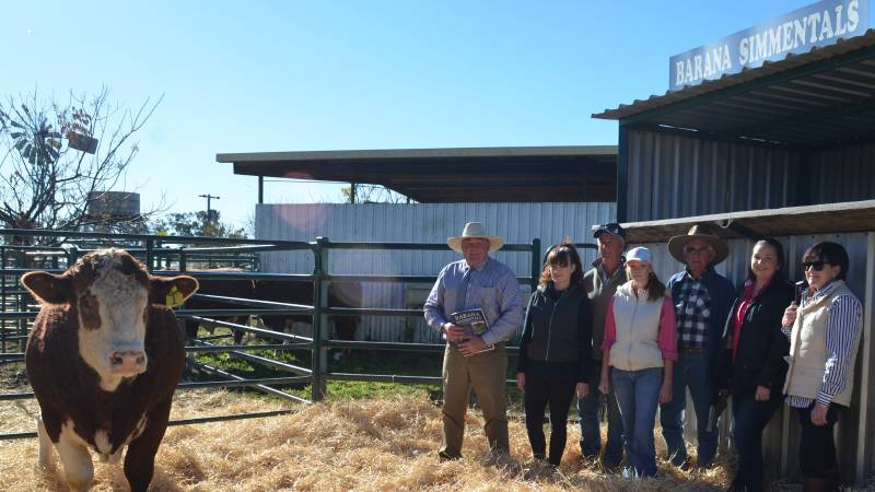 The Barana Simmentals 17th Annual Property Sale saw two top priced bulls sell to Taylor, Brett, Bronte and Bruce Nasmith, Coolah, with one of the draft of 3 bulls purchased, here with Peter, Maddi and Charmaine Cook.