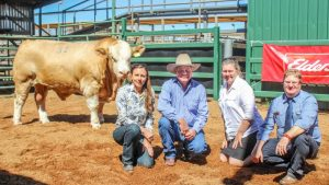 Top priced bull, Billa Park Maximum Impact with vendor Claire York, Billa Park Simmentals, Jackson, with buyers Andrew Moore and Karen Britton, Lucrana Simmentals, Texas, and GDL agent Mark Duthie.