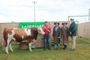 Naracoopa Simmental stud principal Kevin Hard (left), Denmark, with the $7250 equal third top price bull of the Landmark Great Southern Blue Ribbon Bull Sale and its buyers Les and Anna Wolfe, Youngs Siding and Landmark auctioneer Michael Altus. Photo by Farm Weekly