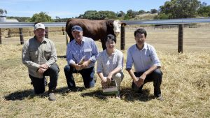 Michael and Graeme Kempe, Artimore & Partners, Tintinara, were the buyers of the top price $11,000 bull with Lakeside principals Lily Xu and Dong Zhu. Photo by Stock Journal