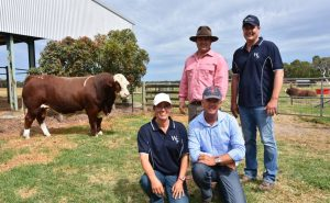 Elders auctioneer Ben Finch, Tom and Lizzy Baker with Brett Nobbs, NCC stud, Duaringa, Qld, who outlaid $27,000 for Lot 1, Woonallee Major League. Photo by Stock Journal