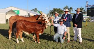 Simbrah grand champion female KBV Brasilia with owners Marty Rowlands and Stephen Lane (holding calf), judge Matt Ahern, Roma, and associate judge Charlie Salter, Dalby. Photo by Fairfax Media