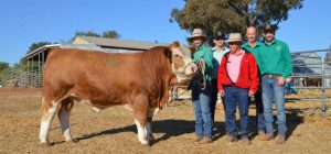 Tennysonvale's Nathan, Jared, Ian and Carl Baldry with Brian Maher, Elders Stud Stock, Wagga, who purchased the top-price bull, Tennysonvale Merrick, on behalf of Reagan Burrow, Yerwal Estate, SA. Photo by The Land