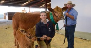 George Wragge, Tullayr Simmentals, Scone, with his $28,000 purchase, Savannah Zoe M04, the reserve senior champion Simmental female held by Vaughan Campagnolo and exhibited by the Campagnolo family, Savannah stud, Oaklands Park, SA.