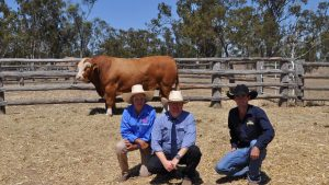 Jan Bradshaw, Blue Dog Simmentals, Wandoan, Mark Duthie, GDL and John Dumma, Summa Simmental stud, Middlemount, with the top priced Blue Dog Mansfield (P). Photo by QCL